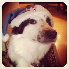 Roxy wishes everyone a Merry Christmas