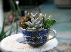 ♥ Hmmm...trip to the hardware store to get a new drill bit and all of my old teacups become planters!