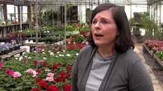 Before you buy those Valentine's Day flowers, watch this video to see why brick and mortar florists are the right choice! Brick And Mortar, Florists, Support Small Business, Challenges, T Shirts For Women, Watch, Videos, Garden, Flowers