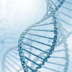 Nasce a evolução biológica
