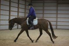 To begin to develop a horse's musculature, it's important to start slowlyand take the time to createa solid foundation to build on later. This can be a young or green horse that&#8217…