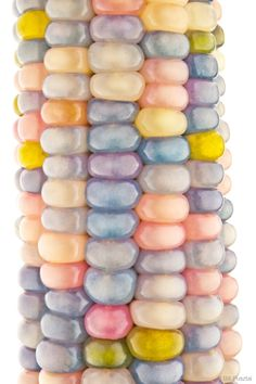 Zea may 'Glass Gem' (aka 'Glass Gems', 'Glass Gem Corn', 'Rainbow Corn').  There seems to be some disagreement over the details ...