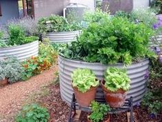 Permaculture Perspective - Suburban Backyard Permaculture Designed Raised Garden Bed/Veggie Tanks Garden
