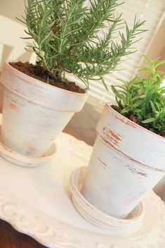 Easy Distressed Terracotta Pots with Herbs ... these micro gardens look great and clay pots just need a coat of paint (whatever colour suits your decor) and then sanding with a coarse sandpaper to get the distressed look you want! Add potting mix & your favourite herbs like lavender and rosemary. Gorgeous!   The Micro Gardener