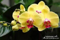 Organic Garden Photograph - Yellow Orchids by Wingsdomain Art and Photography Yellow Orchid, Garden Wall Art, Art Pages, Art For Sale, Organic Gardening, Fine Art America, Orchids, Garden Design, Artist