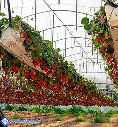 Контейнер для выращивания клубники