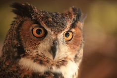 Wise Old Owl Photograph  - Wise Old Owl Fine Art Print