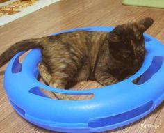 Daljja's cat :: Fun Things