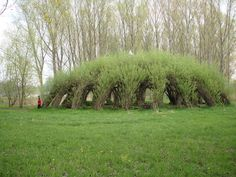 The Auerworld Willow Palace was planted in 1999 by architect Marcel Kalberer, a living canopy of strategically-placed trees woven together. The project was based on ancient techniques used in Neolithic Mesopotamian and European structures.