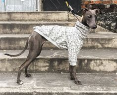 italian greyhound clothing from figsandpoppies