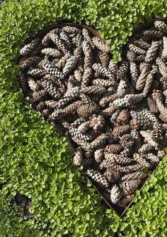 kuva Diy Garden Decor, Garden Crafts, Garden Art, Pine Seeds, Garden Plants Vegetable, Garden Solutions, Recycled Garden, Bottle Garden, Purple Garden