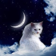 Good night ✨ Raphaël's Art: https://www.etsy.com/shop/RaphaelVavasseur #Cat #Painting #Art #RaphaëlVavasseur #Original #New #Animal #Drawing #Illustration #Catart #Pet #Artwork #Artist #Katze #Gato #Gatto #Kot #猫 #قط #kedi #Picture #Peinture #고양이 #ArtistePeintre #Canvas #AcrylicPainting #Chat #FelineArt #Kat #GraphicDesign
