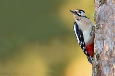 Woody by Mario Severi on 500px