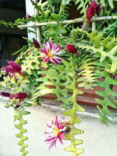 Plants, Cactus Plants, Violets, Succulents, Plant, Planets