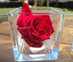 composition florale rose ternelle blanc fleur naturelle. Black Bedroom Furniture Sets. Home Design Ideas
