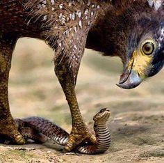Uma águia não luta com uma serpente no chão. Ela a agarra e a transfere para um outro campo de batalha: o céu. Depois de levá-la para o alto, a solta em direção ao chão. Uma cobra não tem nenhuma resistência, nenhum poder, nenhum equilíbrio no ar. Ali revela-se inútil, fraca e vulnerável. No chão, é mortal, sábia e poderosa. Como uma águia, não limite-se a lutar no reino físico. Leve a luta para o Reino do Espírito: ORAÇÃO! As decisões que mudam as coisas aqui na terra são tomadas no Céu.