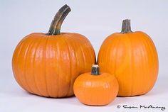 Halloween pumpkins clipart #halloween #pumpkin