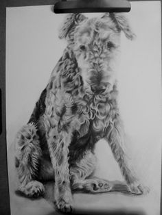 Custom Pet Portrait Drawing