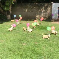 In case you wondered how Heaven looks like❤️🎈 cutest baby animals In case you wondered how Heaven looks like❤️🎈 Cute Puppies, Cute Dogs, Dogs And Puppies, Cute Babies, Doggies, Cute Little Animals, Cute Funny Animals, Funny Cute, Tier Fotos