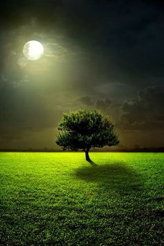 Moon and tree