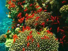 Arrecifes de Boca del río y Alvarado - Veracruz