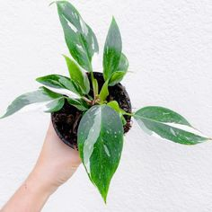 Herb Garden, Home And Garden, Growing Greens, Plant Aesthetic, Bougainvillea, Plant Care, Shades Of Green, Houseplants, Indoor Plants