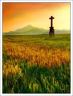 Peace  'When I survey the wondrous Cross'.