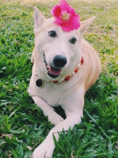 Meet Gluta The Happiest Dog In The World That Beat Cancer - Meet gluta the smiling dog that beat cancer