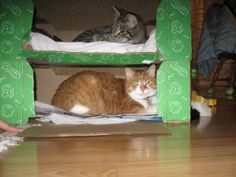 Busy cats rest period - cat condos from reused cardboard boxes