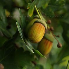 Pölcz Klaudia - kisklau: Botanikus kertben