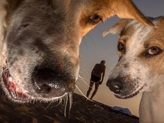 Dougie-wallace_goan-to-the-dogs_photography_itsnicethat_1