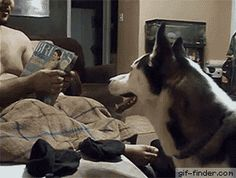 Dog afraid of Julia Roberts | Gif Finder – Find and Share funny animated gifs