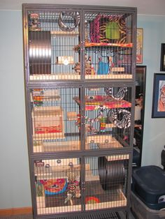 New cages are finished! - Chins & Hedgies Love the way the shelves and hidey houses are arranged!
