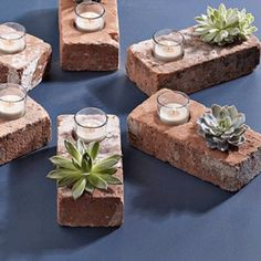 DIY Container Ideas for Planting Succulents : EcoSalon | Conscious Culture and Fashion