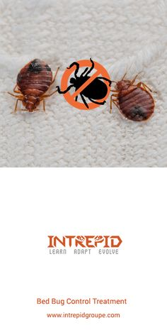 Our result-oriented Bed Bug Control Treatment helps you remove bed bugs effectively via professional methods. Bed Bug Control, Pest Control, Get Rid Of Squirrels, Bed Bugs Treatment, Natural Pesticides, Pest Solutions, Organic Soil, Beneficial Insects, Organic Matter