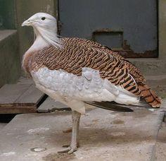 Türkiye'nin en büyük kuş türü olan toy (Otis tarda), aynı zamanda dünyada uçabilen en büyük kuşlardan biridir.