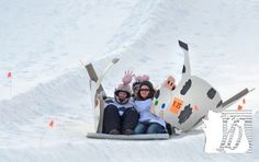 "Kelsey Kraft, 14, Sarah Strain, 12, Madi Strain, 15, and Cameron Miller, 16, all of Dover, zoom down the slopes in their ""Tipper the Cow"" sled during the 2013 Cardboard Derby at Roundtop Mountain Resort, Sunday January 27, 2013. The teens were from a youth group at Calvary Lutheran Church in Dover.  John A. Pavoncello photo - jpavoncello@yorkdispatch.com"