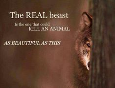 The real beast is the one that could kill an animal as beautiful as this =(