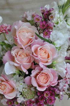 """シュシュ:FL、中輪、四季咲き、樹高1.0m、微香。植木鉢。かわいらしい丸弁の花びらは、咲き進むにつれて中心がクシュクシュになり、髪をまとめるヘアアクセサリのよう。やわらかなアプリコットピンク~クリーム色への花色の変化が楽しめる。""""ラ・マリエ""""と一緒にアレンジするとお互い引き立てる。"""