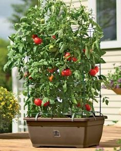 Turn Storage Containers into Self Watering Tomato Planters GARDENS