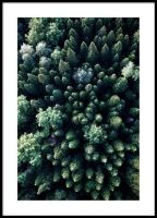 Forest Aerial Poster in the group Posters & Prints / Nature at Desenio AB Poster Xxl, Poster Shop, Foto Poster, Poster Mural, Poster Prints, Morning Sun, New York Poster, Forest Poster, Design Inspiration