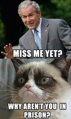 Funny as heck! Grumpy Cat tells it like it is. Grumpy Cat Good, Funny Cats, Funny Animals, Funniest Animals, Funny Animal Pictures, Cat Memes, Cool Cats, In This World, Just In Case