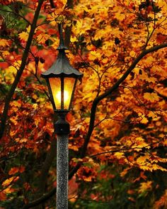 ~Simpe beauty of the fall~
