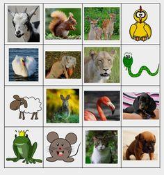 Lajitellaan eläimiä ja kasveja. Värikkäät kuvat sekä piirroksina että valokuvina. Erotatko eläimet ja kasvit toisistaan?