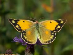 Postcards from Sussex: Clouded Yellow festival