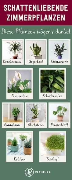 Shadow Loving Houseplants: Our Top 10 - .- Schattenliebende Zimmerpflanzen: Unsere Top 10 – Shadow Loving Houseplants: Our Top 10 – -