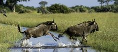 Moremi Reserve Game Reserve, Safari, Wildlife, African, Tours, Park, Pictures, Animals, Photos