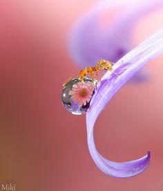 水滴にお花が写りこんで、蟻がそれを大事に持ってるみたい。 小さな蟻のお姫様。 ミクロな世界を映し出す浅井さんワールドの写真たちをご堪能ください!