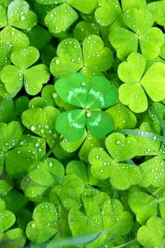 Water on leafs Wallpaper Plants Nature Wallpapers) – Wallpapers and Backgrounds World Of Color, Color Of Life, Green Flowers, Green Colors, Colours, Photographie Macro Nature, Beautiful Gardens, Beautiful Flowers, Best Iphone Wallpapers