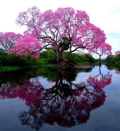 """Ipe"" comes from the Tupi ï'pé, ""tree husky "" . ""Pau d'arco"" is a reference to…"